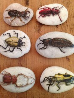 Set Of 6 Hand-Painted Beetle Bug River Rocks From Thailand Signed By The Artist! Rock Painting Patterns, Rock Painting Ideas Easy, Rock Painting Designs, Pebble Painting, Pebble Art, Stone Painting, Stone Crafts, Rock Crafts, Sugar Skull Painting