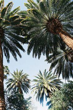 Palm trees, sun