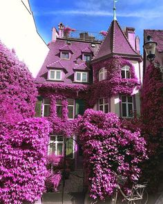 Because it's purple!!!! Basel, Switzerland Photo by @sert_mehmet #awesomedreamplaces