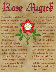 Magick Spells: Rose - Pinned by The Mystic's Emporium on Etsy Wicca Witchcraft, Magick Spells, Imprimibles Halloween, Kitchen Witchery, Practical Magic, Believe In Magic, Book Of Shadows, Herbalism, Witches