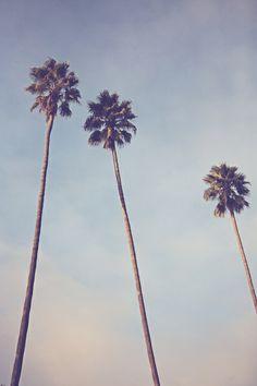 Sunshine & Warmth - Los Angeles California Palm Trees