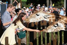 """Prince William and Catherine, Duchess of Cambridge, aka Kate Middleton, feeding carrots to giraffes at the Taronga Zoo, Sydney, Australia. She is rewearing a broderie anglaise dress in """"primrose yellow,"""" Stuart Weitzman Minx wedges, Kiki McDonough Citrine Drop earrings and a necklace of charms from the Woodland collection by Asprey of London. 4/20/14"""