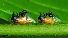 ALLPE Medio Ambiente Blog Medioambiente.org : ¿Una hormiga? No, un cuerno
