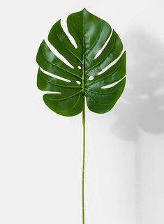 Helpful Guidelines In Growing Indoor Bonsai Trees Small Artificial Split Philodendron Leaf Faux Plants Online Jamali Garden Leave In, Leaf Drawing, Plant Drawing, Fake Plants, Hanging Plants, Plants Indoor, Outdoor Plants, Potted Plants, Garden Plants