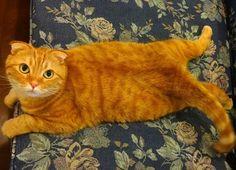 ネコ - バスカヴィル家の猫
