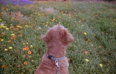 ☆ little star ☆ I Love Dogs, Puppy Love, Paws And Claws, Companion Dog, Film Inspiration, Therapy Dogs, Dog Travel, France, Sweet Life