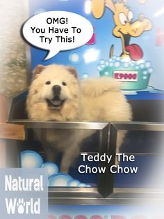 If you want self serve dog wash service and you can buy dog teddy the chow chow enjoying our new self service dog wash dowashchronicles solutioingenieria Images