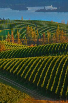 Blue Mountain Vineyards - Okanagan, British Columbia