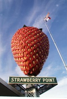 World's Largest Strawberry at Strawberry Point, Iowa. According to some early press, after it's initial installation iat the city offices, the strawberry fell from it's photogenic perch in a high wind. Originally a JayCees project (what exactly are jay-cees, anyway? I know what they do, just not why they're called what they're called... UPDATE - Junior Chamber of Commerce - J.C.- JayCees!), the city spent a pretty penny getting the strawberry back to it's original glory.
