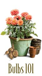 Time to plant spring blooming bulbs! This is an excellent site for learning about choosing & planting bulbs.