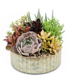 Look what I found on #zulily! 9'' Live Cactus & Succulent Round Tin Garden #zulilyfinds