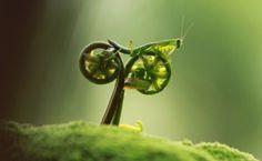 Un grillo en bicicleta