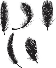 Google Image Result for http://wowvectors.com/preview/feathers.jpg