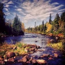 Image result for tree National Forest, Mountains, Landscape, Water, Travel, Outdoor, Image, Gripe Water, Outdoors