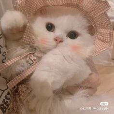 Adorable Cute Animals, Cute Cats, Baby Animals Pictures, Cute Animal Pictures, Zodiac Characters, Cat Icon, Cat Aesthetic, Kawaii Cat, Baby Cats