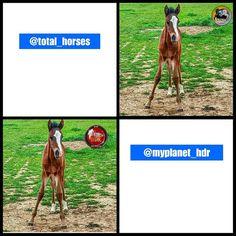 Repost de agradecimiento a las galerías @total_horses y @myplanet_hdr que han escogido mi foto del potrillo.  Y mi agradecimiento a las personas que se han fijado en dicha foto  @jmariaiglesias y @raquelcanobravo