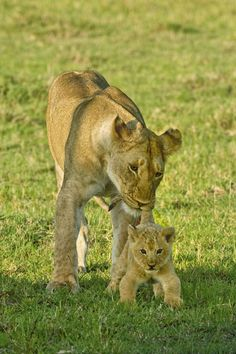 African animals are so cute!