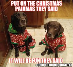 Labs the best funny dog joke pics,inspirational dog stories and dog news - the best funny dog joke pics,inspirational dog stories and dog news Funny Dog Jokes, Funny Animal Memes, Dog Memes, Animal Quotes, Funny Dogs, Funny Animals, Cute Animals, Funny Memes, Dog Quotes