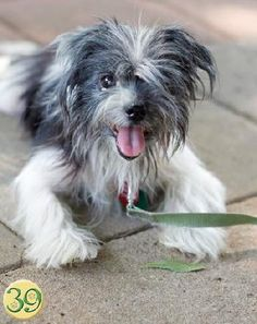 Photo Gallery: Duncan ♥ Chinese Crested Powder Puff, Smiling Dogs, Make You Smile, Photo Galleries, Gallery, Face, Animals, Animales, Roof Rack