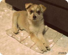 here's Teddy, my sweet sweet puppy