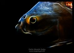 Foto de um peixe transformada digitalmente. Veja mais em www.facebook.com/cecgodoyphotos