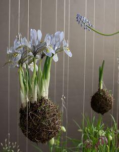 Висячие сады Федора ван дер Фалька (Fedor van der Falk) : «Д.Журнал» — журнал о дизайне и архитектуре