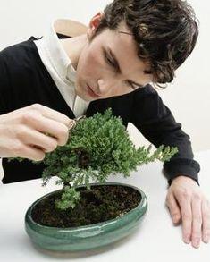juniper bonsai care.