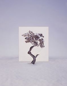 Myoung Ho Lee, Tree #12, 2008. From the series Tree. Archival Inkjet Print