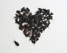 Woad seeds. For falling down.