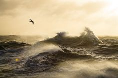 Antarctic Wildlife by Justin Hofman -1