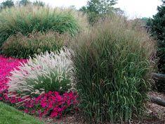 Особенности внешнего вида злаков позволяют им удивительно <br /> хорошо сочетаться с любыми объектами ландшафта, с любыми <br /> садовыми стилями. С ними существует множество садовых <br /> «затей».