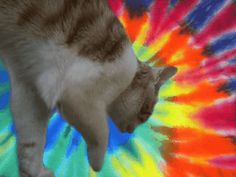 Have A Nice Trip, Astral Projection, Psychedelic Art, Third Eye, Cats, Animals, Gatos, Animales, Bon Voyage