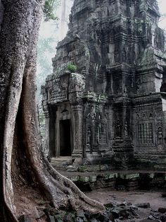 Tree and Temple, one of the many ancient structures in the vast Angkor Wat, Cambodia