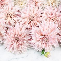 August means Cafe au Lait dahlias . Hope you're having a wonderful Wednesday! (last day to enter the @brush_dance calendar giveaway! See previous post.) Gorgeous dahlias from @dianeszukovathy Paris and France always @aparisianmoment and @photosbydcp