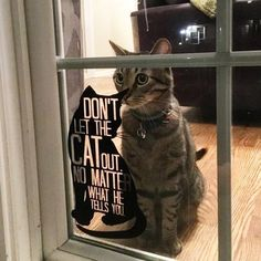 Cat Training Don't Let the Cat Out Vinyl Cat Decal Crazy Cat Lady, Crazy Cats, Cool Cats, Animals And Pets, Cute Animals, Baby Animals, Gatos Cool, Cat Signs, Cat Room