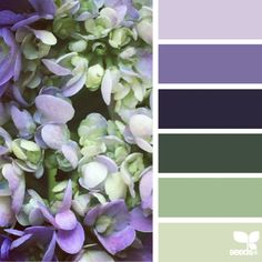 """""""today's breathtaking inspiration image for { hydrangea hues } is by @gildedbloom ... thank you Lisa for sharing your amazing Lavender Lacecap Hydrangea…"""""""