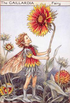 The Gaillardia Fairy