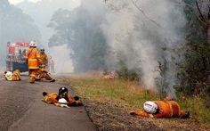 imagini cu incendiu de padure - Căutare Google