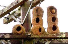 El hornero común construye el nido con barro y arcilla, protegiéndolo de posibles ataques de depredadores. Una vez abandonado sirve de refugio a otros pájaros.
