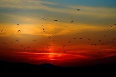 Flock of Birds Flying Above the Mountain during Sunset · Free Stock Photo Sunset Wallpaper, Nature Wallpaper, Types Of Photography, Nature Photography, Camera Photography, Beautiful Sunset Images, Nicolas Vanier, Ligne D Horizon, Acrylic Pouring Art