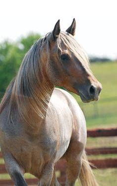 (92) For The Love Of Horses - Photos