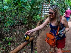 Parque das Aves - Tucanos