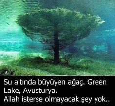 """594 Beğenme, 2 Yorum - Instagram'da Tamer Sengul (@tamersengul991): """"Peygamber Efendimiz (s.a.v.) buyurdular: Kim evinden çıkarken Bismillâhi tevekkeltü alellâhi  lâ…"""""""