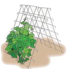 Incomparable Vegetable Gardening Tips At Your Backyard Ideas. Impressive Vegetable Gardening Tips At Your Backyard Ideas. Veg Garden, Garden Shrubs, Garden Pests, Vegetable Gardening, Cucumber On Eyes, Cucumber Plant, Avocado Plant, Cucumber Trellis, Gardening For Beginners