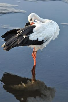 White Stork by Pavlo Lutsan