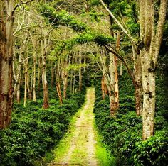 My place.. Orosi, Cartago, Costa Rica. The best place in the word. Adventure, nature, mountain, valley, animals. Best expirence forever!