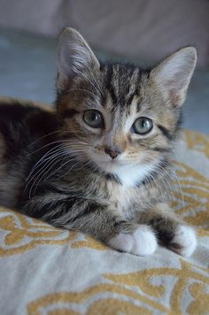 Have you fallen asleep Kittens And Puppies, Cute Cats And Kittens, Kittens Cutest, Cute Puppies, Cute Dogs, Ragdoll Kittens, Tabby Cats, Funny Kittens, Bengal Cats