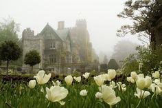 Royal Roads University, Victoria, BC - Most Beautiful University Campuses In Canada O Canada, Canada Travel, Victoria City, Student Travel, Newfoundland And Labrador, Green Landscape, Quebec City, Vancouver Island, Photos
