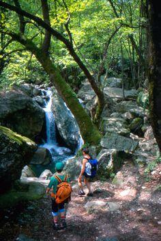 Pelion - Walking in nature Camping Guide, Camping Hacks, Camping Activities, Outdoor Activities, Trekking, Go Outdoors, Windsurfing, France, Walking In Nature