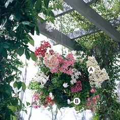 While geraniums and petunias are classic favorites, don't be afraid to take a chance with a new plant to create baskets your friends will ooh-and-ahh over. Here, butterfly orchid, an underused but long-blooming tomato relative, does the job perfectly. Grow it in sun. Tip: Do your research before growing a new plant so you can be sure it's appropriate for your spot. A. Schizanthus 'Treasure Trove' series -- 5 B. Cyclamen 'Laser White' -- 2